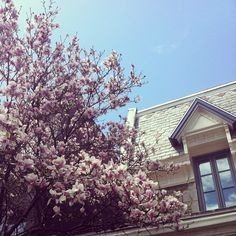 Spring in Montreal // Photo by UneParisienneM