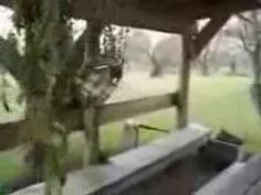 Squealing Frog   Funny Video Clips, Funny Movies, Viral Videos 2014 - http://movies.chitte.rs/squealing-frog-funny-video-clips-funny-movies-viral-videos-2014/