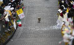 Dog On Parade, theatlantic: A dog runs through a parade route after the Popemobile passed in Guanajuato, Mexico, on March 24, 2012. Pope Benedict XVI was on a visit to ...Image credit Yuri Cortez/AFP/Getty Images #Photography #Dog