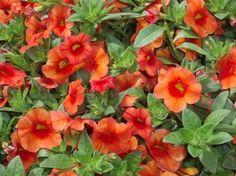 Gardening Tips for the Santa Cruz Mountains » decks and patios