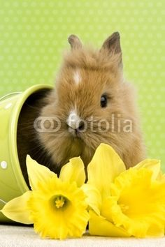 Baby Kaninchen im Blumentopf