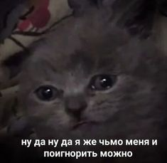 Memes Funny Faces, Funny Video Memes, Stupid Memes, Russian Cat, Russian Memes, Hello Memes, Cool Pictures, Funny Pictures, Sweet Memes