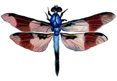 Dragonflies Artwork   Vintage Clip Art - Colorful Dragonfly - The Graphics Fairy