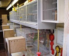 bird breeding cages photo