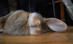 Sweet dreams, lovely big bunny...