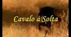 Cavalo À Solta - Ary dos santos - Fernando tordo #music