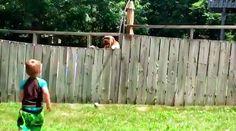 В Сети стал вирусным ролик, в котором маленький мальчик играет в мяч с собакой, и это несмотря на то, что их разделяет забор.