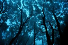 Blue Forest, Sintra, Portugal    photo via moment