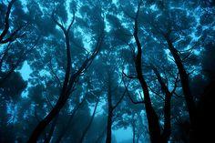 "trees + blue light + ocean-like + ""Looking up"""