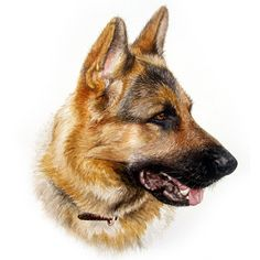 Dog Portraits - Watercolour Dog Portraits by Artist Christopher J ...