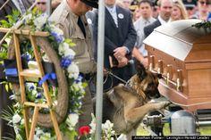 Police Dog Figo Pays Lasts Respects To His Fallen Partner, Officer Jason Ellis (PHOTO)