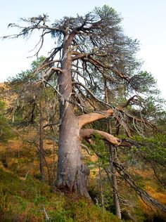 Furukjempene i Trollheimen | Vindøldalen