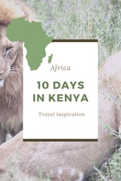 The ultimate guide to spending 10 days in Kenya. From rainforests to famous lakes, this tour of Kenya has it all! #safari #kenya #travel Kenya Travel, Africa Travel, Africa Destinations, Winter Destinations, Top Countries To Visit, African Jungle, Wild Elephant, Rainforests, Christmas Travel