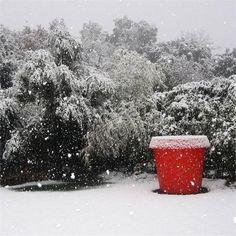 Rote Akzente und winterliche Landschaft