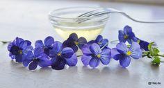 Frosted flowers -  kandiserte fioler. Les mer på bloggen.