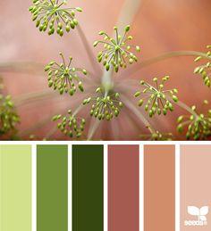 dill hues