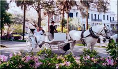 Horse and carriage in Savannah.