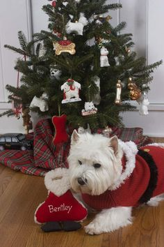 Would change up the colors...but love this idea...Tuffy's own Christmas tree with little doggie ornaments:)
