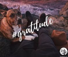 The practice of gratitude can shift your entire perspective in any moment. Try it out today when you're tempted to feel the opposite of gratitude, even in the littlest moments when you feel annoyed, stressed or negative about something. Practicing gratitude is incredibly freeing and up-lifting. As you practice gratitude you see that accepting yourself, everyone and everything for exactly what is and who is, becomes part of the experience. Sure, not everyone is going to fit your standard, nor do they have to. Not every situation is going to work out exactly how you want, yet it's comforting to know that everything is working out for you in the most perfect path leading you toward an identity that matches your desires. Practice more gratitude in your daily moments of struggle.  #TalkToMeThursday #gratitude #mindsetshift #lifehacks #dailyinspo #dailygrowth Growth Quotes, Practice Gratitude, Life Purpose, Annoyed, Going To Work, Lifehacks, Talk To Me, Mindset, Perspective