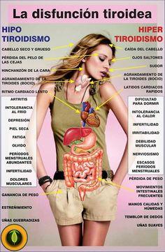 Síntomas de la disfunción tiroidea: hipotiroidismo e hipertiroidismo Health And Nutrition, Health And Wellness, Health Care, Health Fitness, Examen Clinique, Thyroid Health, Health Remedies, Healthy Tips, Human Body