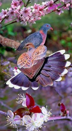 10 Birds That Look More Like Aliens Than Animals Bird Pictures, Nature Pictures, Animal Pictures, Cute Birds, Pretty Birds, Exotic Birds, Colorful Birds, Nature Animals, Animals And Pets
