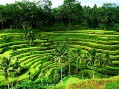 Indonesia favorite-places-spaces