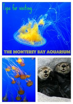 Check out these tips for visiting The Monterey Bay Aquarium! The Monterey Bay Aquarium's FREE Field Trip programs are designed for students and homeschoolers (PreK – 12 Grade) to learn, have fun and discover their connections to the ocean while explo Best Family Vacations, Family Vacation Destinations, Family Travel, Travel Destinations, California Vacation, California Dreamin', Central California, Monterey Bay Aquarium, Travel With Kids
