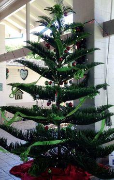Hawaii Christmas trees in Wahiawa!!!