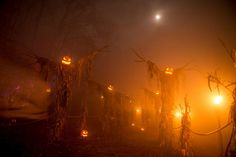I absolutely love this scarecrow Halloween scene by Haunted Overload!!! xoxoxoxo PUMPKINROT.COM: What's Brewing
