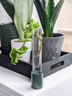 Not a woodworker but love the look of test tube propagation stations? Check out how to make the easiest test tube propagation stand in just a few minutes! Homemade Furniture, Homemade Home Decor, Pothos Plant, Plant Propagation, Candlestick Holders, Candlesticks, Gardening For Beginners, Gardening Tips, Monstera Deliciosa