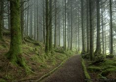 Picture of path and trees
