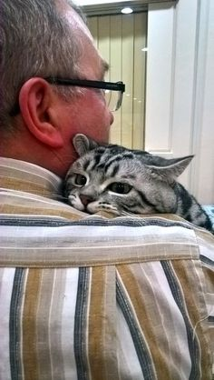 Piroska   Xenzuu Cats, Animals, Gatos, Animales, Animaux, Animal, Cat, Animais, Kitty