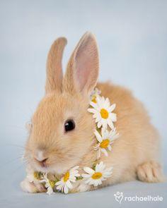 Google Image Result for http://www.petassure.com/animal-pictures/wp-content/uploads/20111005.jpg