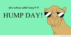 You Know What Day It Is wednesday hump day humpday hump day camel wednesday quotes happy wednesday wednesday quote happy wednesday quotes Happy Hump Day Meme, Hump Day Quotes, Wednesday Hump Day, Hump Day Humor, Happy Wednesday Quotes, Wednesday Humor, Happy Quotes, Funny Quotes, Funny Memes