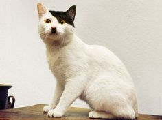 Does This Cat Remind You Of Somebody? http://techmash.co.uk/2014/08/07/does-this-cat-remind-you-of-somebody/ #cat #hitler