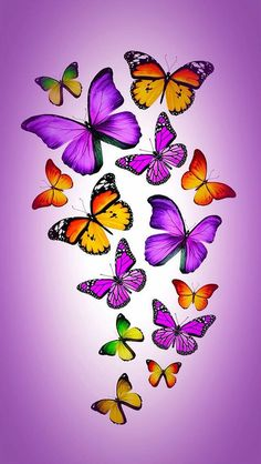 New Ideas for flowers orange beautiful butterflies Butterfly Artwork, Butterfly Background, Butterfly Drawing, Butterfly Pictures, Butterfly Painting, Butterfly Wallpaper, Butterfly Crafts, Purple Butterfly, Beautiful Butterflies