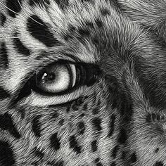 Image detail for -example of scratchboard art fur techniques