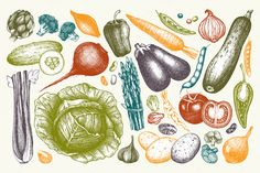 Hand Drawn Vegetables Collection by Yevheniia on @creativemarket