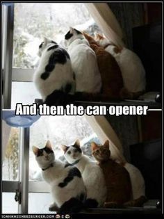 can opener  - Upload pictures of your cat(s) at www.showmecats.com #showmecats #thefunny