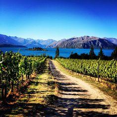 Part of Wanakafest 2013. Rippon Vineyards Central Otago, Wanaka.. historical landmark, one of NZ's pinnacle wine making families