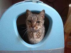 Quenotte, femelle, né en 2004. Rescue Association Protection féline Bretagne (adoption chat)
