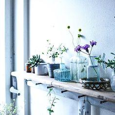 植物のある暮らし/グリーンのある暮らし/棚のインテリア実例 - 2016-04-05 01:23:07 | RoomClip(ルームクリップ)