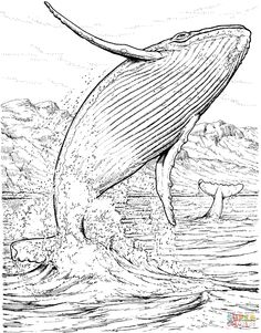 Image from http://www.supercoloring.com/sites/default/files/styles/coloring_full/public/cif/2014/11/blue-whale-jumping-out-of-the-water-coloring-page.gif.