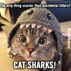 We don't think there's anything scarier than accidental litters!