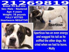Urgent Animals at Fort Worth Animal Care and Control **Fort Worth, TX**CURRENT STATUS: Must be tagged for adoption or rescue by  https://www.facebook.com/photo.php?fbid=564251513646947&set=a.563961673675931.1073742119.137921312946638&type=1&relevant_count=1