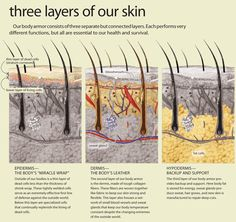 Explanation on how the skin (dermis) works. Skin Anatomy, Diy Beauty Secrets, Layers Of Skin, Acne Skin, Natural Skin Care, Beauty Skin, Skin Care Tips, Simple, Natural Beauty Tips
