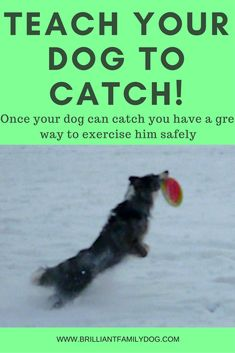 Step-by-step to a catching dog and safe exercise. Read the post ...