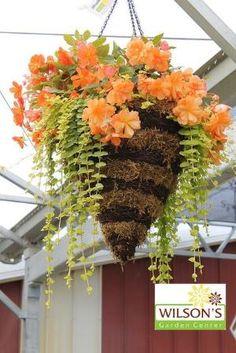 Hanging Basket by amalia
