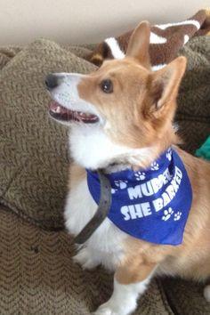 Tucker! Dog Cat, Corgi, Pets, Street, Animals, Animaux, Animales, Corgis, Roads