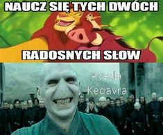Avada Kedavra to Timon i Pumba Stupid Funny Memes, Wtf Funny, Harry Potter Mems, Harry Potter Action Figures, Polish Memes, Funny Mems, Pokemon, Funny Photos, Hogwarts